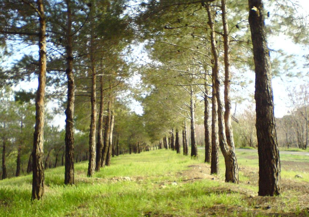 Chitgar park