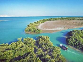 Mangrove Forests of Qeshm