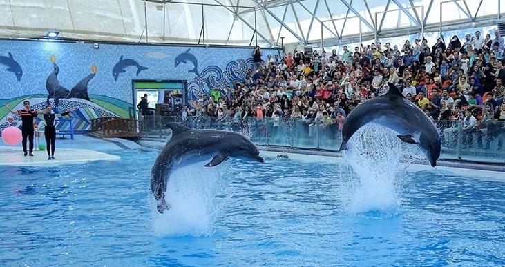 Kish Dolphin Complex