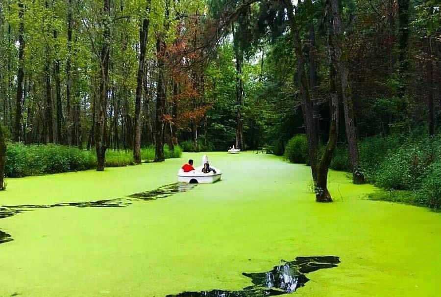 Saravan Forest Park - apochi.com